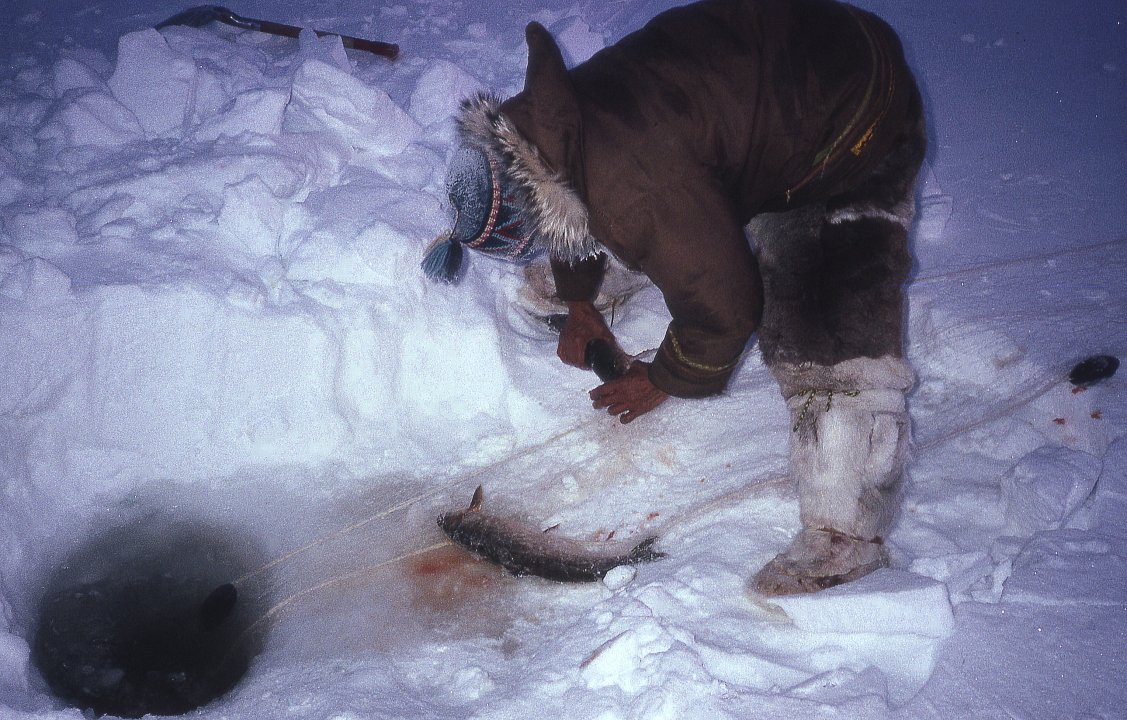 Facts About Inuit Food http://www.johntyman.com/arctic/inuit102.html