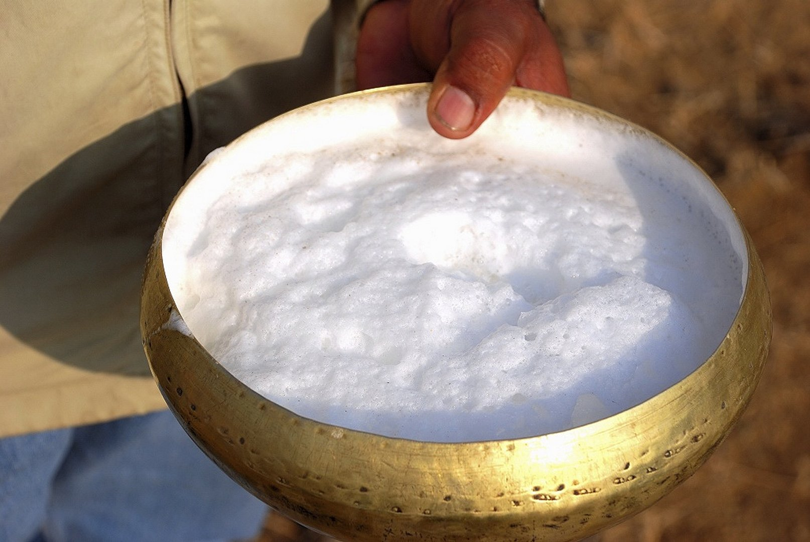 New Superfood Would You Try Camel S Milk Sydney